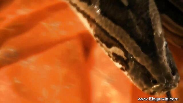 বহু পুরুষের এক নারির, বাংলা xxx ভিডিও এক মহিলা বহু পুরুষ,